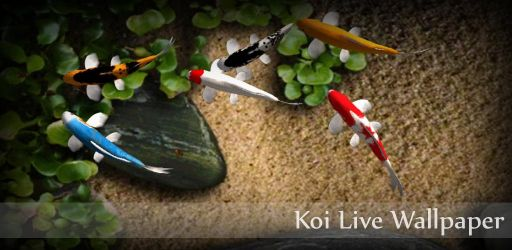 Koi Live Wallpaper android